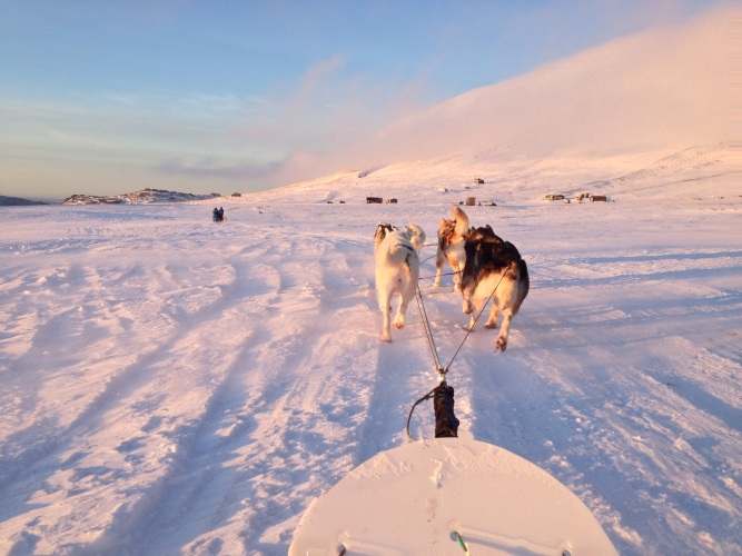 Dog-Sledding-Reykjavik-Iceland
