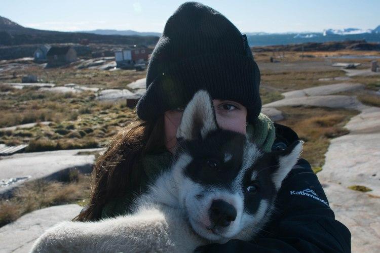 oqaatsut-greenland-husky-dog