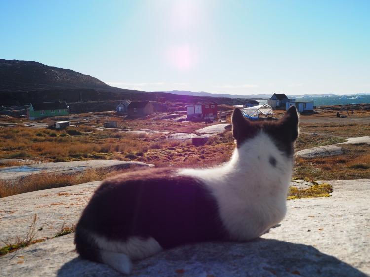 greenland-oqaatsut-rodebay-sledge-dog