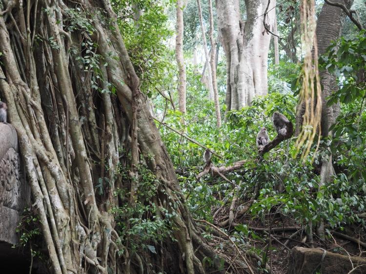ubud-monkey-temple-bali