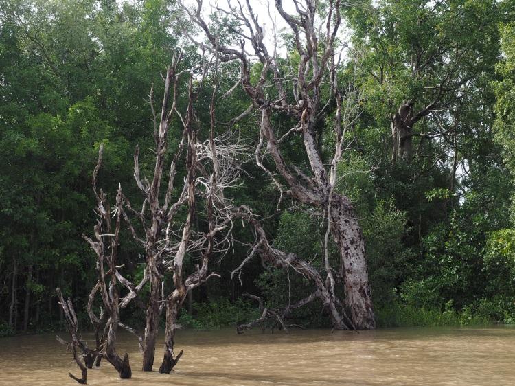 darwin-adelaide-river-crocodile