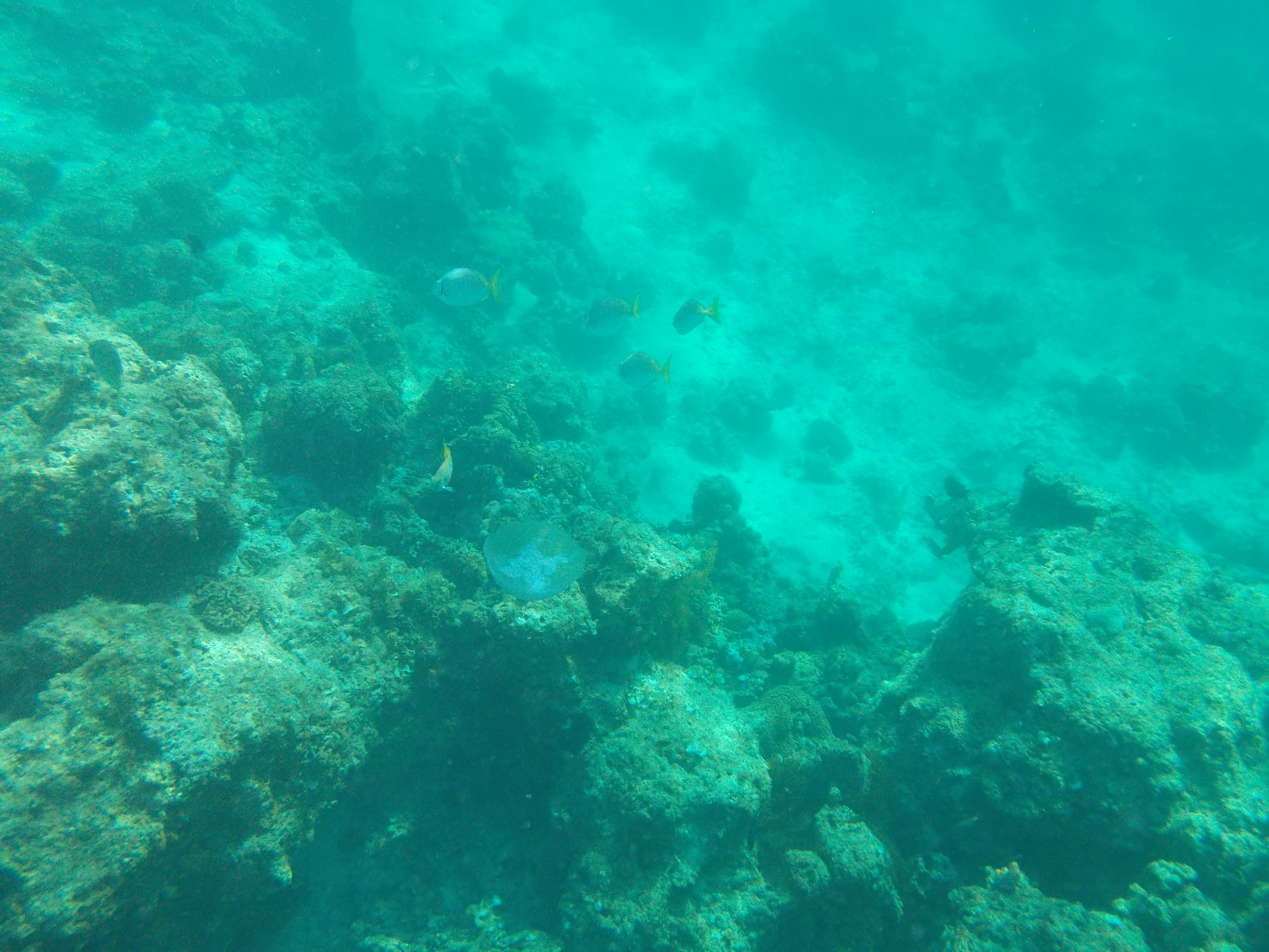 El nido jellyfish