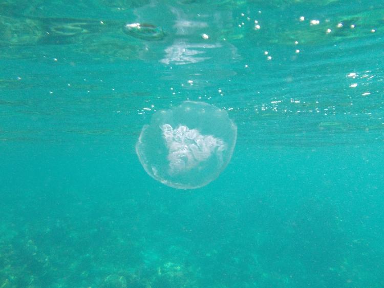 moon-jellyfish-el-nido