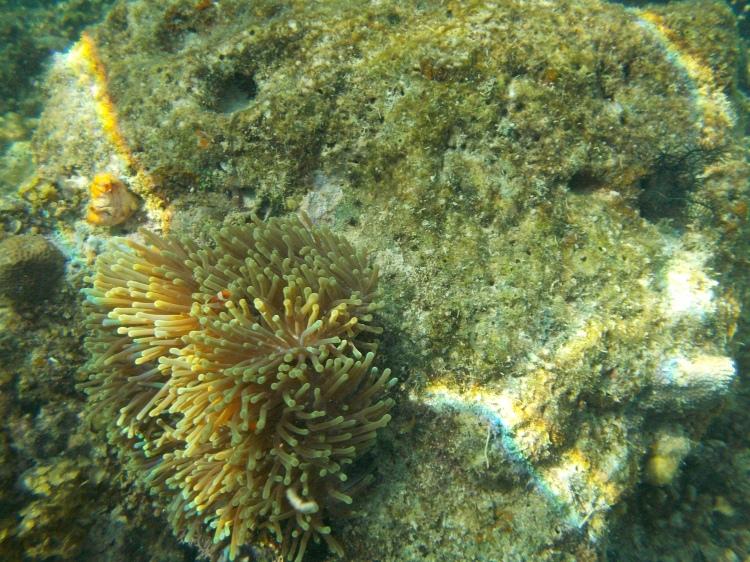 coral-reef-el-nido