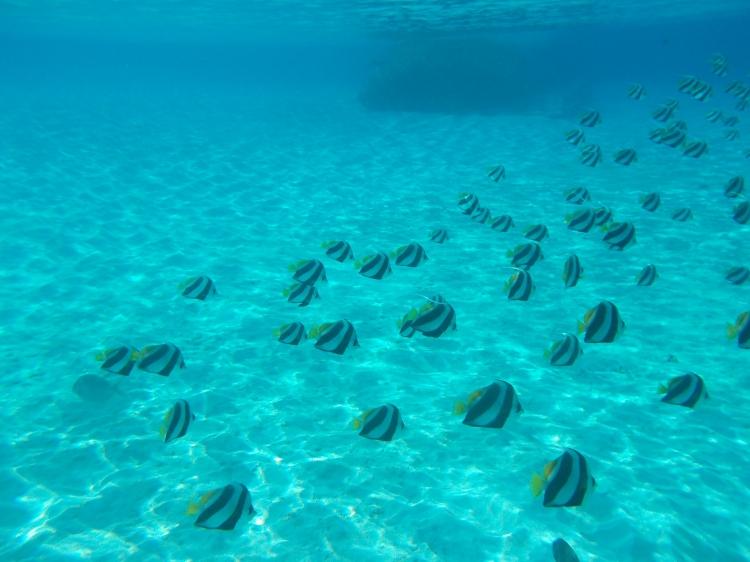 reethi-maldives-wwellend-snorkel