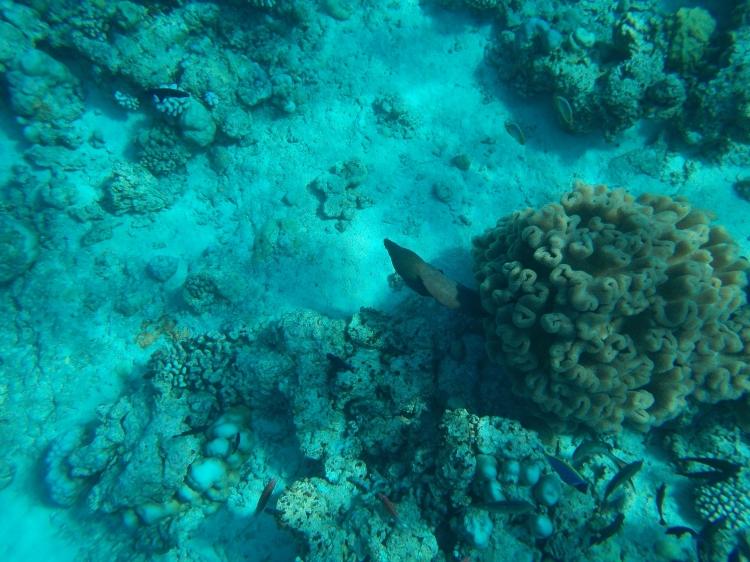 maldives-reethi-snorkel-wwellend
