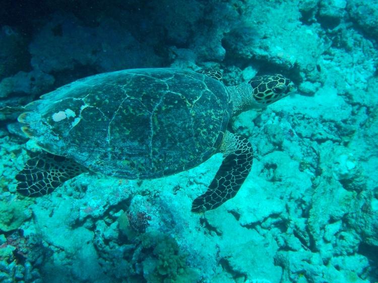 maalifushi-maldives-como-snorkel