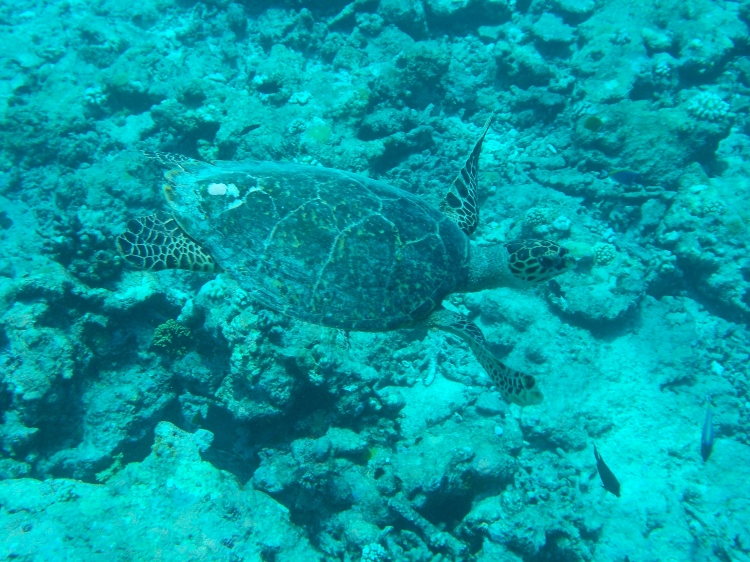 maldives-maalifushi-como-wwellend