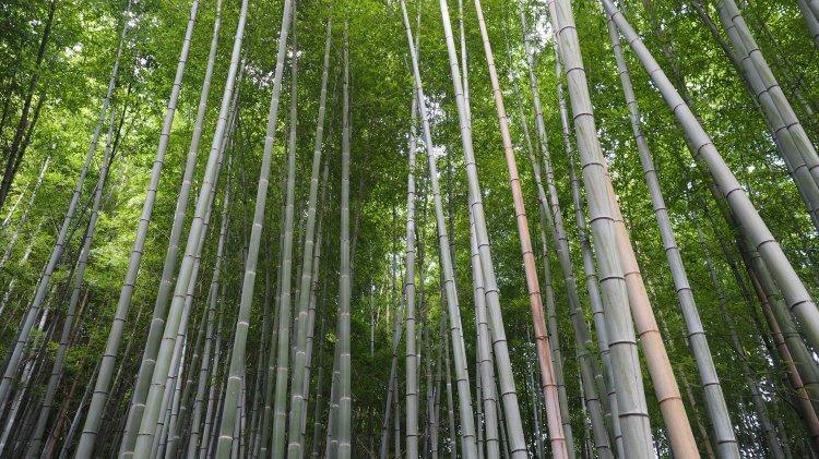 kyoto-arashiyama-bamboo-japan