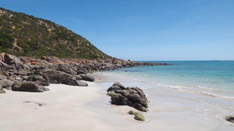 dolphin-marion-bay-south-australia