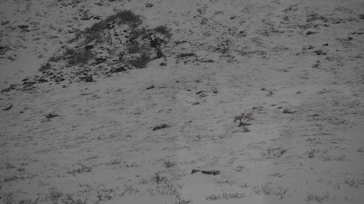 Spot the reindeer!