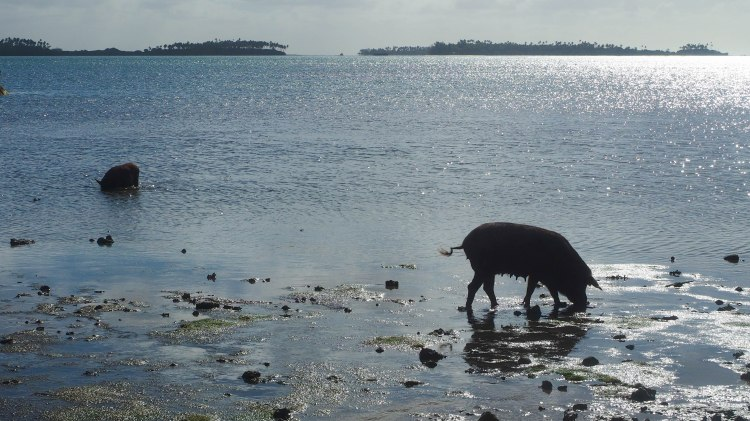 tongatapu-tonga-travel-blog-solo-backpacking-guide-fishing-pigs