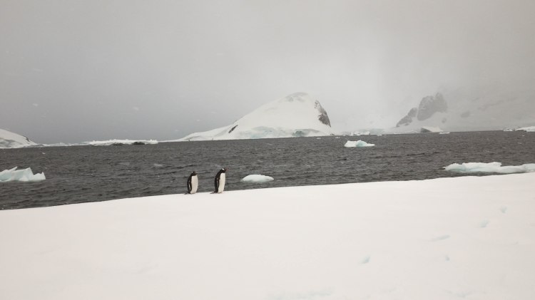 camping-antarctica-travel-blog-solo-oceanwide-expeditions-ortelius-seventh-continent-kerr-point